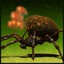 It's Bomber in Earth Defense Force: Insect Armageddon
