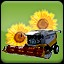Seeding Sunflower (2) in Agricultural Simulator 2013 Steam Edition