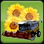 Seeding Sunflower (3) in Agricultural Simulator 2013 Steam Edition