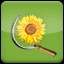 Harvest Sunflower (1) in Agricultural Simulator 2013 Steam Edition