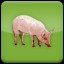 I love Pork (1) in Agricultural Simulator 2013 Steam Edition