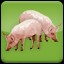 I love Pork (2) in Agricultural Simulator 2013 Steam Edition