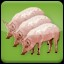 I love Pork (3) in Agricultural Simulator 2013 Steam Edition