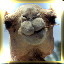 Camel in R.C. Bot Inc.