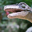 Velociraptor in True or False