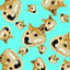 Doge rains from above in Montaro