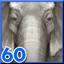 Asian Elephant in Wild Animals - Animated Jigsaws