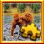 Goldendoodle Complete! in Pixel Puzzles Ultimate