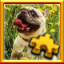 French Bulldog Complete! in Pixel Puzzles Ultimate